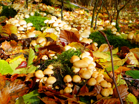 Toadstools and Autumn Leaves