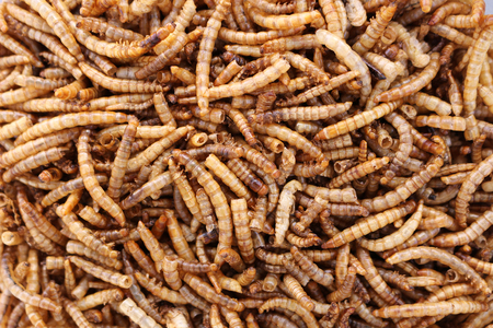 Close up of dried meal worm bird food
