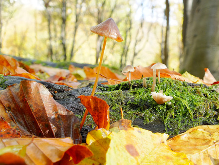 Autumn leaves and toadstool in a woodland Stock Photo