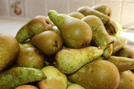 A pile of freshly picked homegrown pears in the kitchen Stockfoto