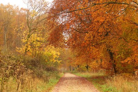 Autumnal walk in a forest