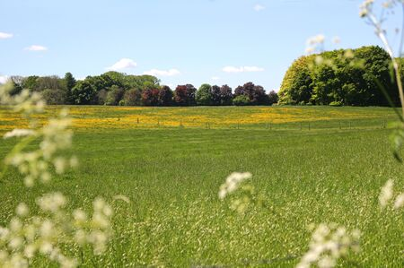 A green meadow with a row of trees in the distance