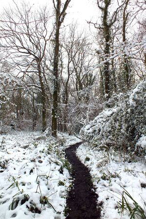 Footpath through a snow covered winter woodland
