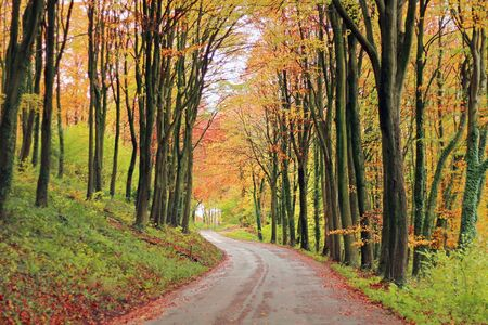 A road passing through woodland in Autumn