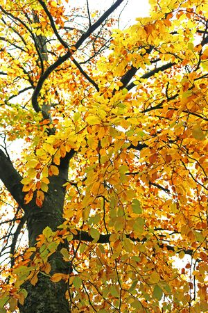 Changing leaves of a tree in Autumn