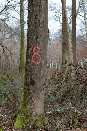 Tree trunks in a forest, one with the number eight on Фото со стока - 134504548