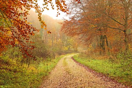 Footpath into a misty autumn forest