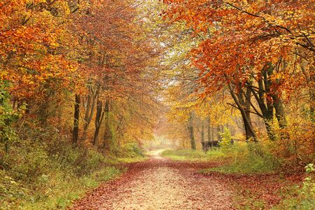 An avenue of autumnal trees in a park Фото со стока