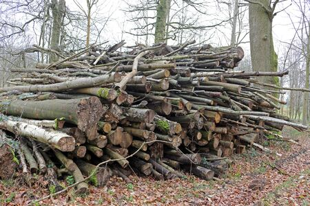 A pile of felled logs in a forest