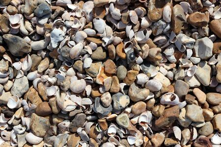 Pebbles and shells on a shingle beach
