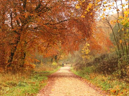 A path through a park in Autumn