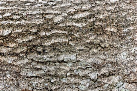 Rough Tree Bark Texture Closeup Standard-Bild