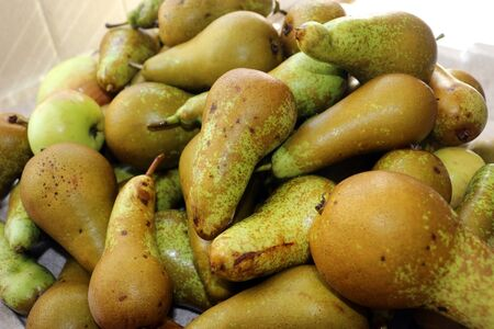A pile of homegrown pears