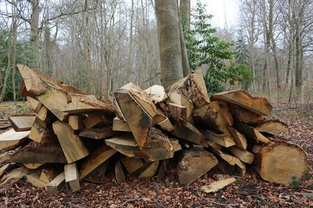 Split logs stacked in a forest Standard-Bild