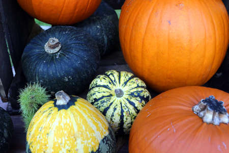 Different varieties of pumpkins together