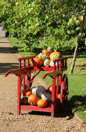 A red cart in the garden full of pumpkins and gourds