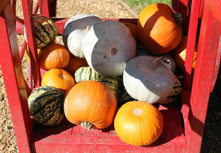 Pumpkins and gourds on a wooden cart in a garden