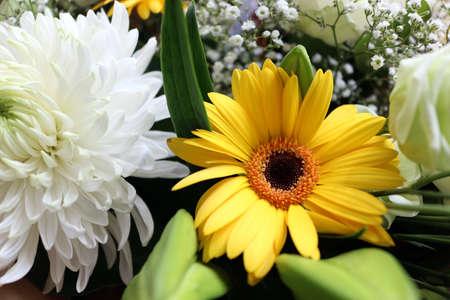 Yellow chrysanthemum daisy flower in a bouquet