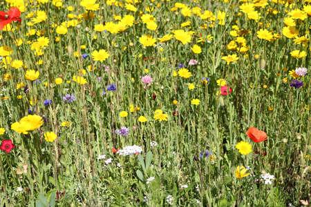 A mix of colourful wildflowers Фото со стока