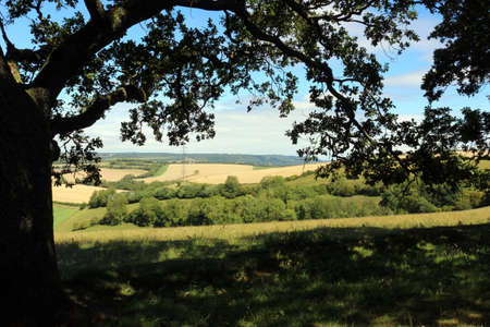 A rural view under the bough of a tree