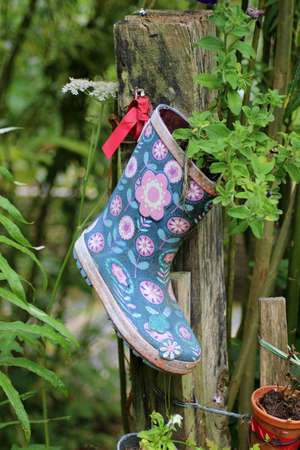 An old wellington boot in a garden with a plant growing out of it