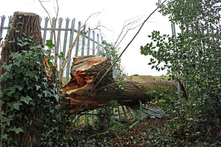 Fallen tree on a metal fence
