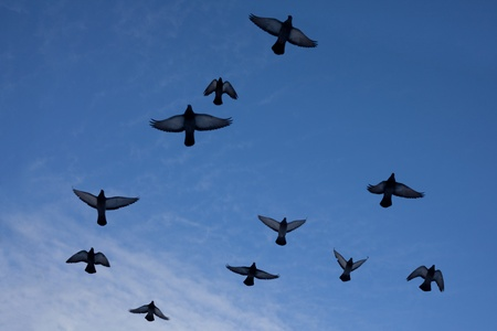 flock of pigeons on a background of blue sky 스톡 사진