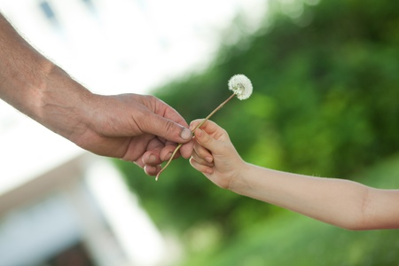 hands convey a flower to each other Stock Photo - 9732397