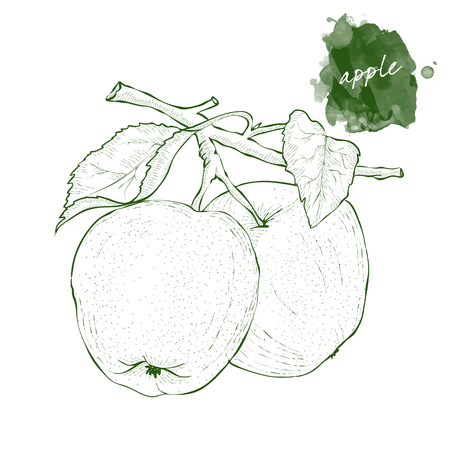 Two apples on a branch with leaves.  Hand drawn harvest sketch set.  Engraved drawing. Design elements for banner, cover, label, package, promote.