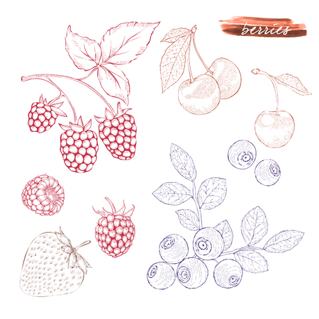 A set of berries: raspberries, blueberries, strawberries and cherries.. Hand drawn harvest sketch set. Engraved drawing. Design elements for banner, cover, label, package, promote.