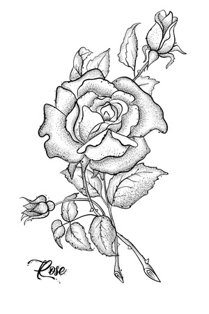 Hand drawn rose vector, etch style, roses and leaves at engraving style. Фото со стока - 94100151