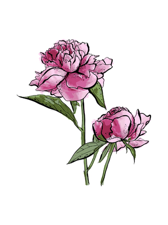 Peonies and leaves, watercolor, can be used as greeting card, invitation card for wedding, birthday and other holiday and summer background