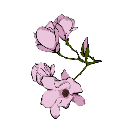 Tender pink flower, twig isolated on white background Spring flowers. Hand drawn vector illustration.