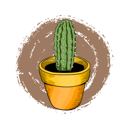 Houseplants, green cactus in a bright flower pot.  Hand drawn vector illustration.