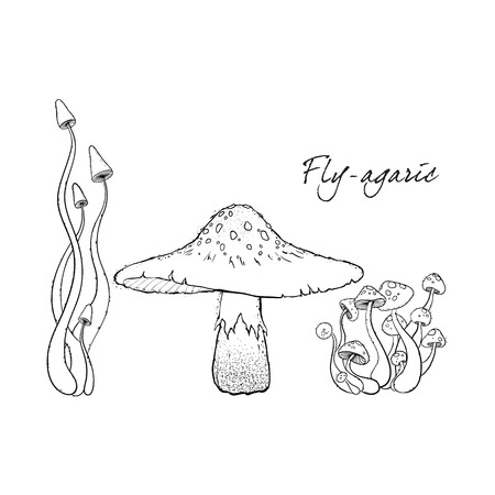Fly agaric, non-edible poisonous forest mushrooms. Sketch. Hand drawn vector illustration.