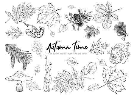 Autumn vector set with leaves, berries, fir cones,  mushrooms. Detailed forest botanical elements for decoration. Vintage fall seasonal decor. Oak, maple, chestnut leaf drawing. Иллюстрация