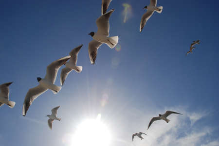 seagulls in the sky