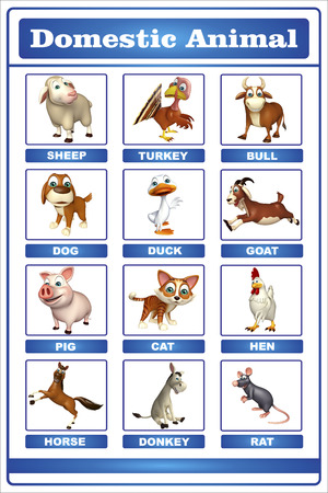 animals collection: 3d rendered illustration of domastic animal chart