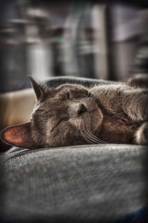 Sleeping Cat photo