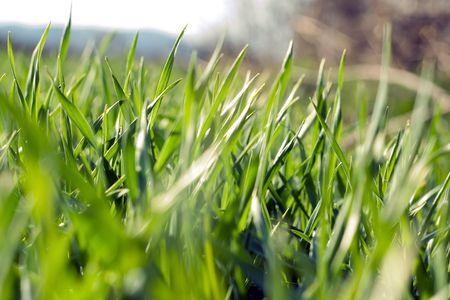 Grass Stock Photo - 2599551