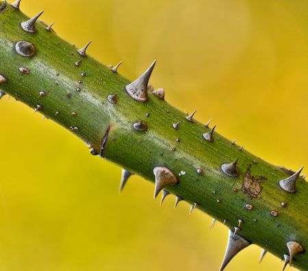 thorny: thorny