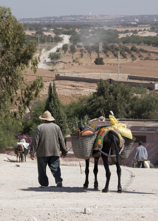 ESSAOURIA, MOROCCO - SEPTEMBER 20 2017: An old man leadis his grocery laden donkey away from the weekly berber open market a short way from Essaouria in Morocco - Portrait