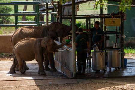 Sri Lanka, - Sept 2015: Rangers feeding milk to young orphaned elephants at the Udewalawe, Elephant transit home