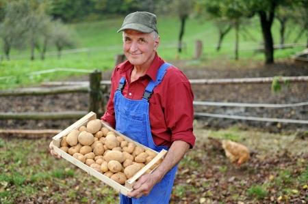potato basket: Happy farmer show his organic potato  Stock Photo