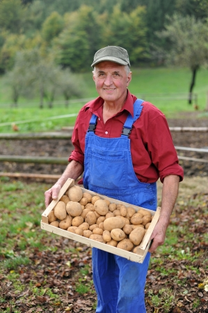 farmer: Happy farmer show his organic potato  Stock Photo