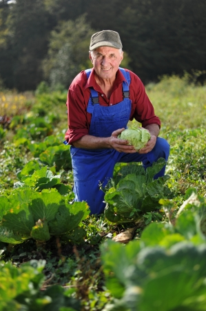 Organic farmer working at cabbage field photo