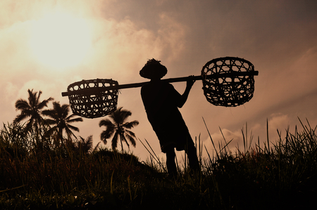 indonesia culture: Farmer with wooden tool to prepare paddy field