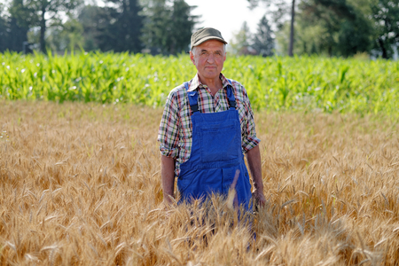 Organic farmer standing in a wheat field, looking at the crop  Model is a real farm worker.