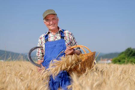 Biologische boer staande in een tarweveld, kijkend naar het gewas Model is een echte boerderij werknemer. Stockfoto