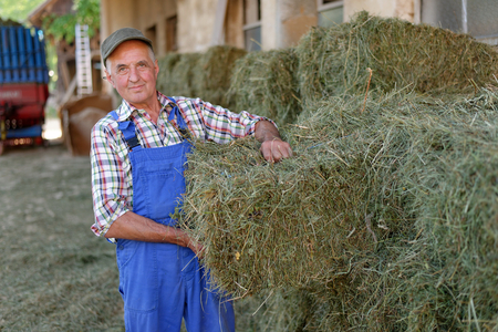 Organic farmer stack bales for feeding livestock. Model is a real farm worker! Stock Photo